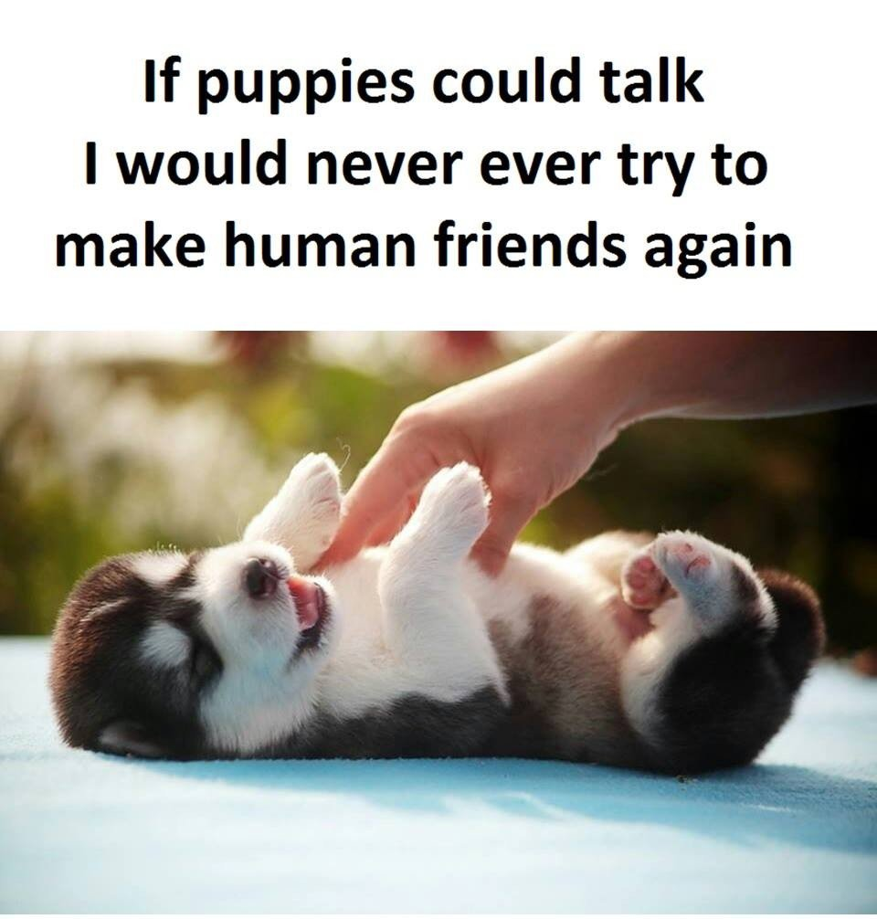 If Puppies Could...