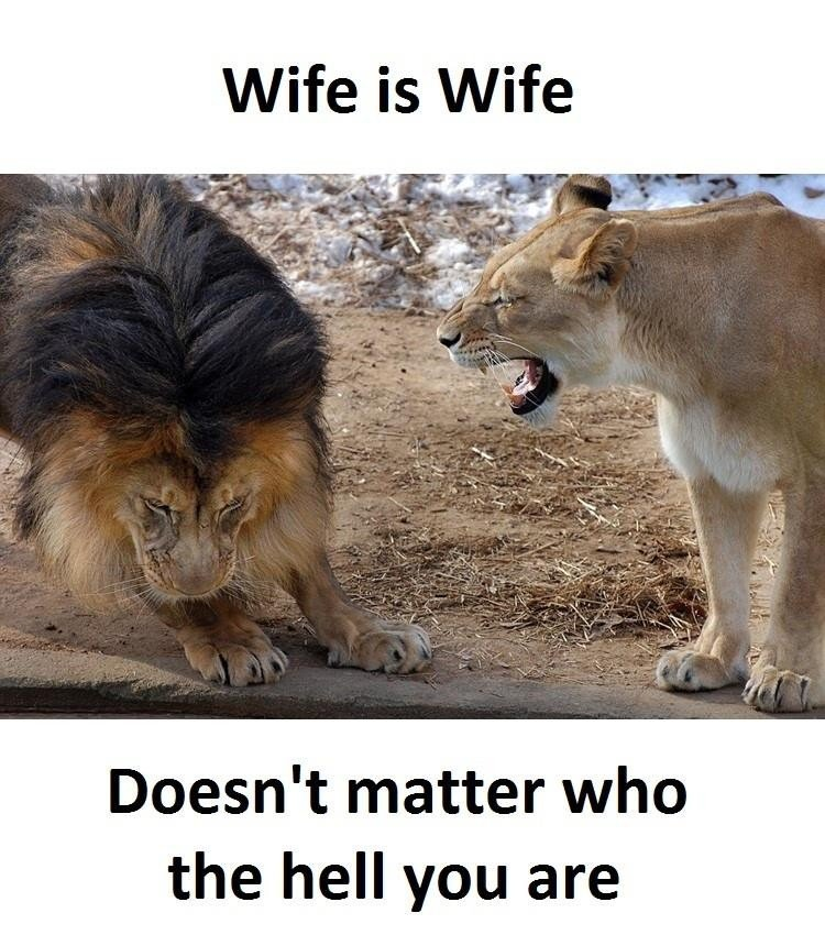 Wife Is Wife...