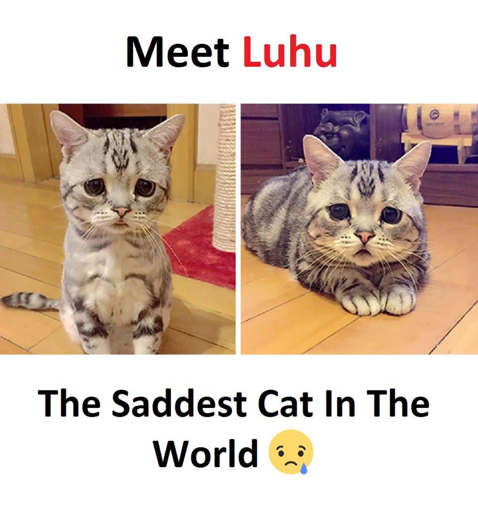 Meet Luhu...