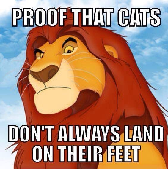Proof That Cats...