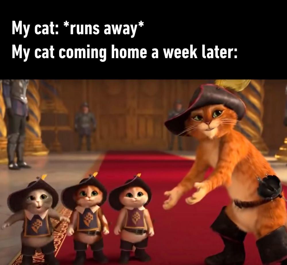 My Cat Runs...