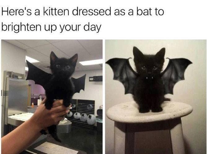 Here's A Kitten...