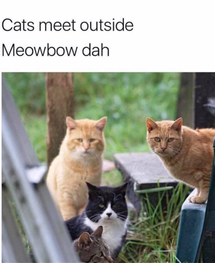 Cats Meet Outside...