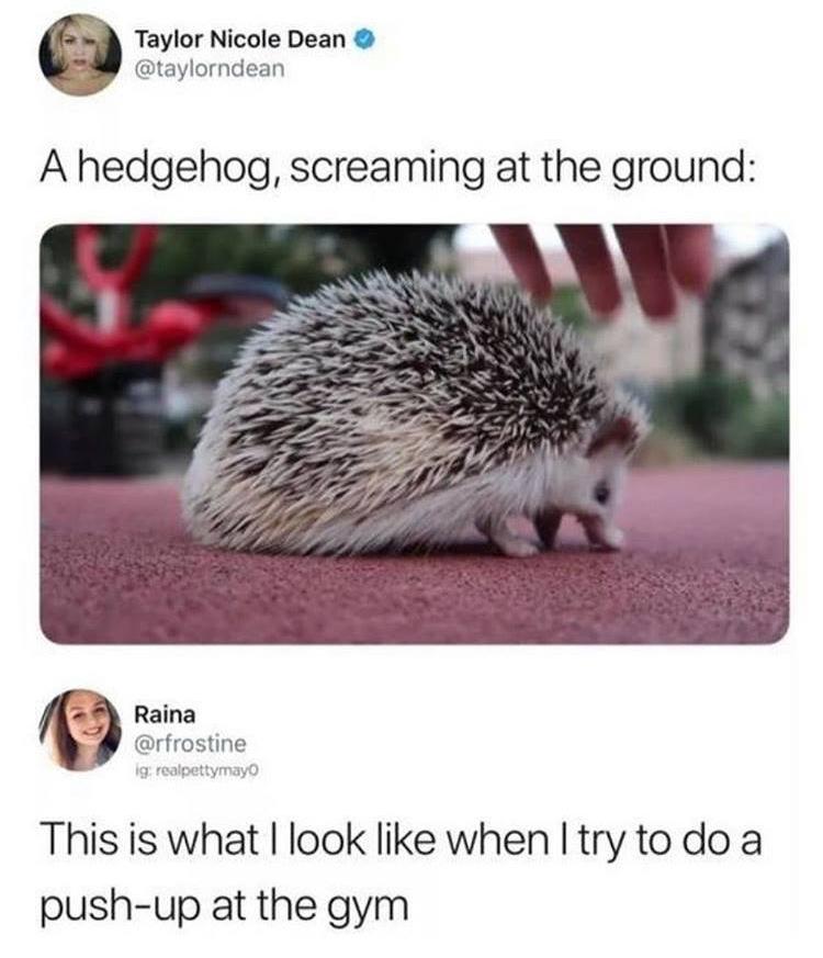 A Hedgehog Screaming...